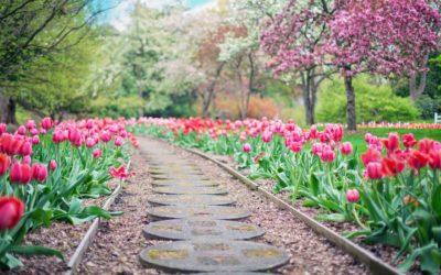 Piękny oraz czysty ogród to zasługa wielu godzin spędzonych  w jego zaciszu w toku pielegnacji.